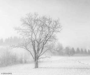 Snow everywhere by VDragosPhotography