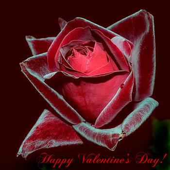 Happy Valentine's Day ! by VDragosPhotography