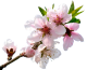 peach bloom by VDragosPhotography