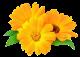 yellow flower by VasiDragos