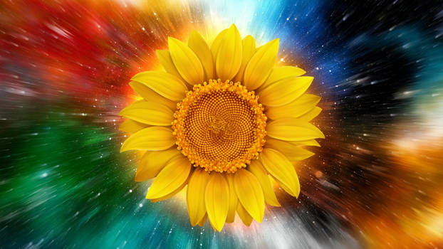 Flower Of The Sun by VasiDragos