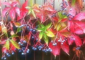 Autumn at my door
