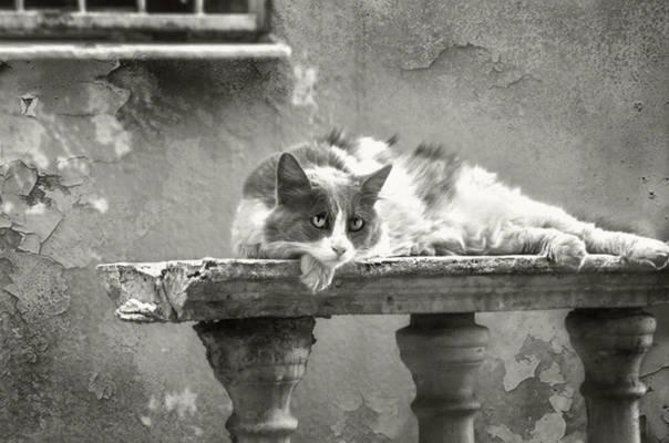 A cozy cat