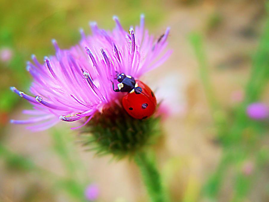 Ladybug story by VasiDragos