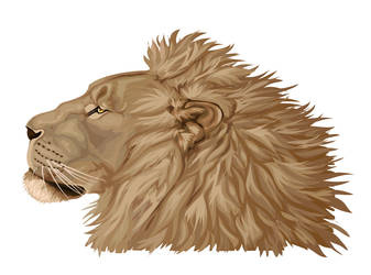 Lion done in illustrator by Maquenda