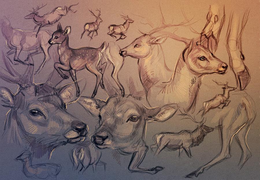 Deer Studies by Maquenda