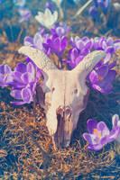 Violet Spring by Maquenda
