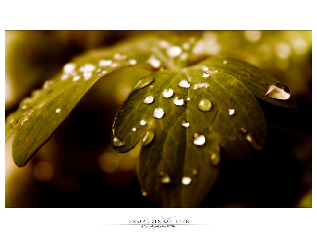 Droplets of life by Mr-Frenzy