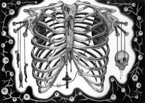 The ribcage