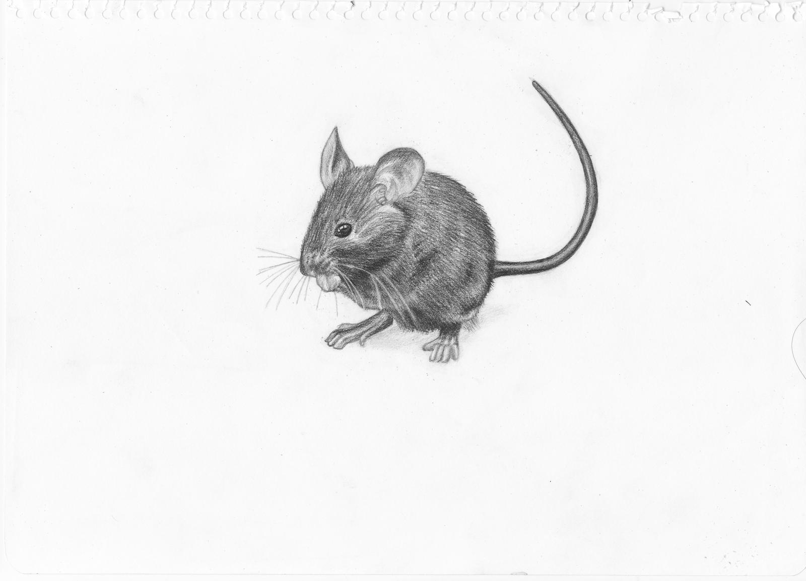Uncategorized Mouse Drawings mouse drawing by adonabauer on deviantart adonabauer