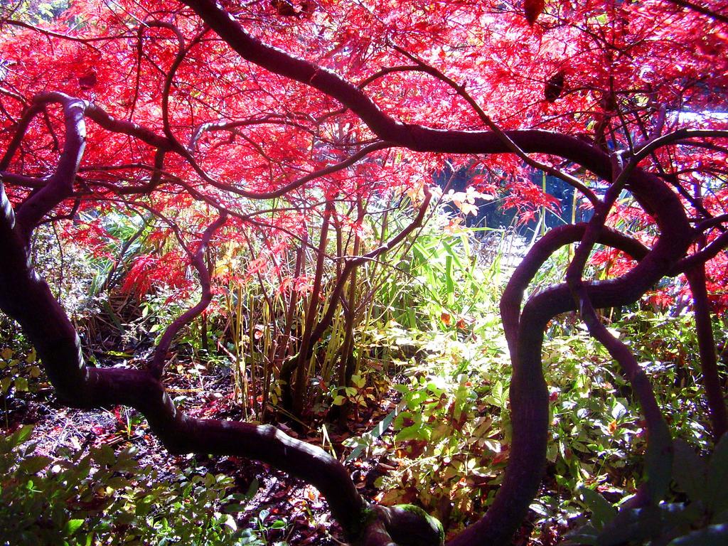 Claude Monets Garden by JennyVonGrimm on DeviantArt