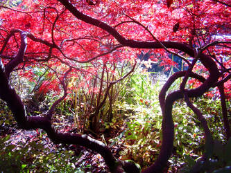 Claude Monet's Garden by JennyVonGrimm