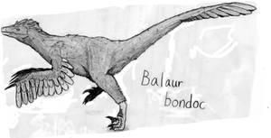 Balaur bondoc Profile
