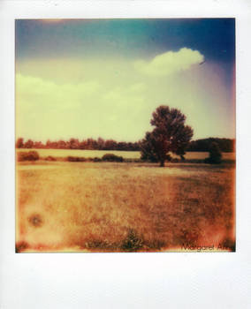 Impossible Film First Flush