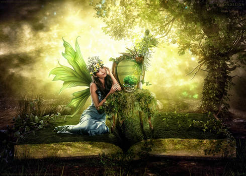 The Book and the Fairy