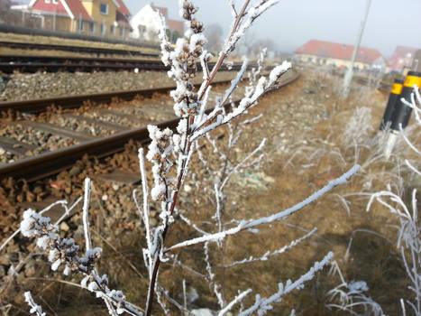 Branch frost