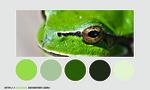 Color palette 003