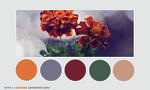 Color palette 004