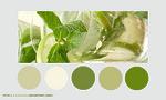 Color palette 018