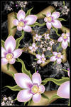 Night Flowering