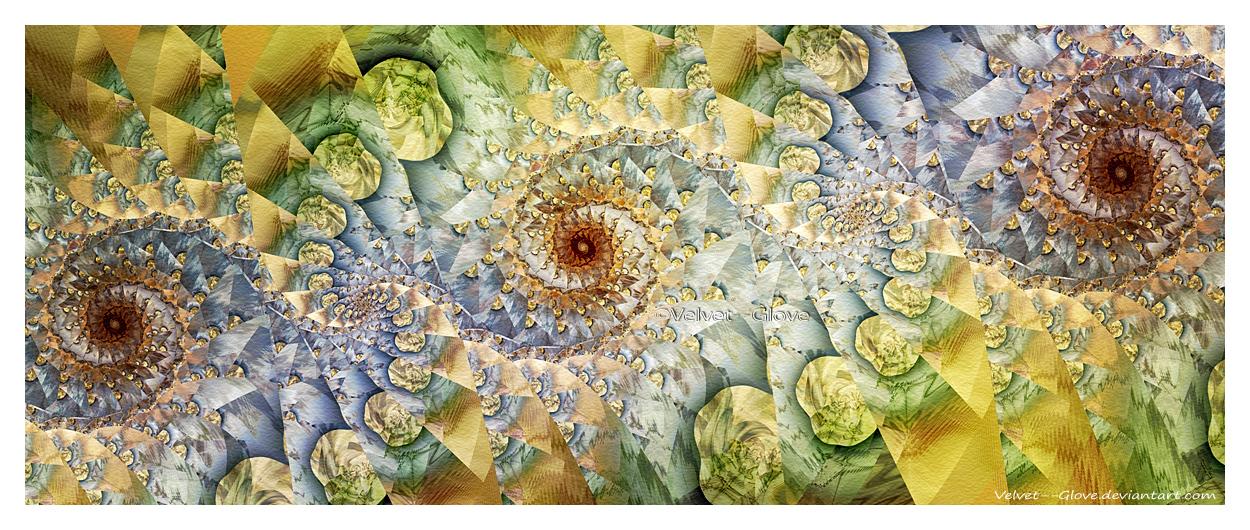 Rich Bed of Ammonites by Velvet--Glove