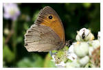 Meadow Brown by Velvet--Glove