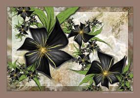 <b>Fleur Noire</b><br><i>Velvet--Glove</i>