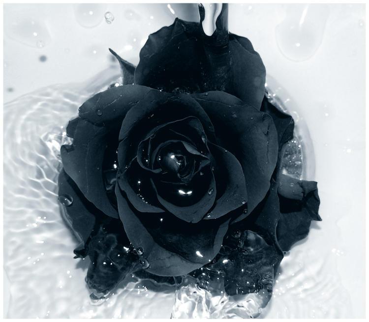 Черно-Белое Фото - Страница 2 Black_Rose_by_Galilea