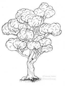 Ancient Tree