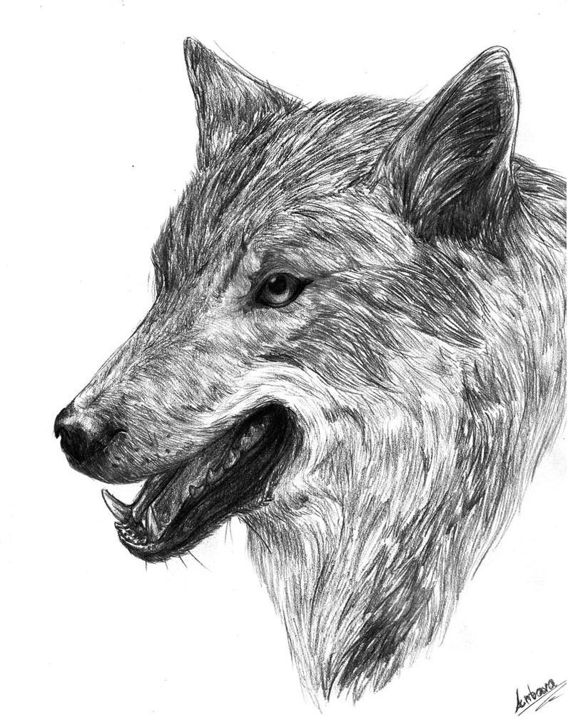 Wolf by Antarija