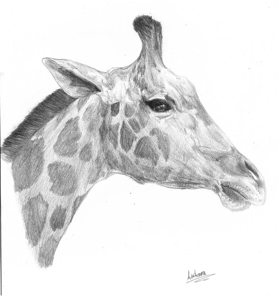 Giraffe by Antarija