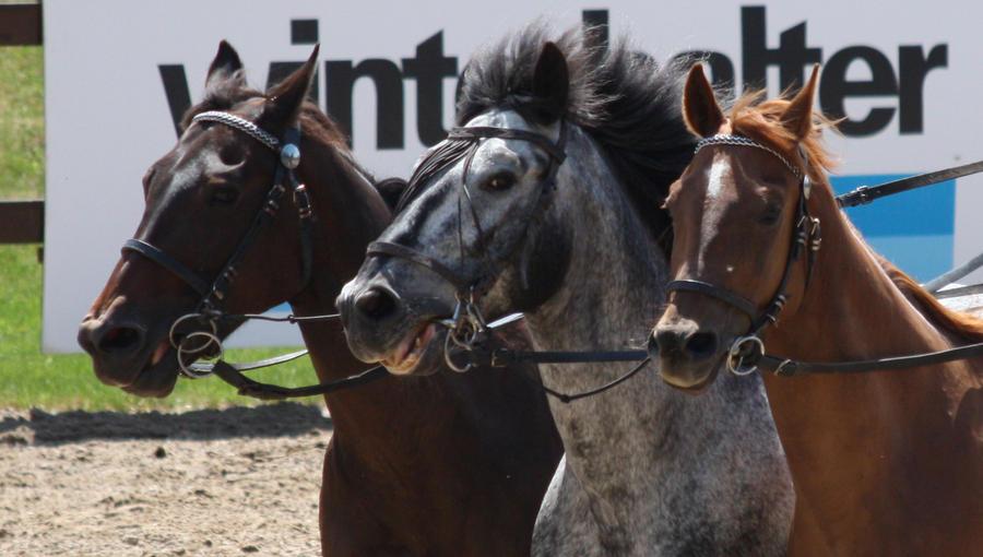 Five-horse something 4 by Antarija