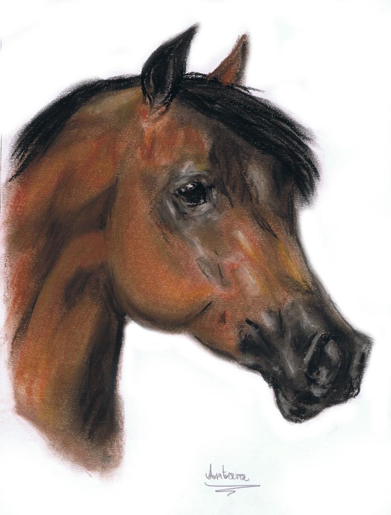 Arabian horse by Antarija