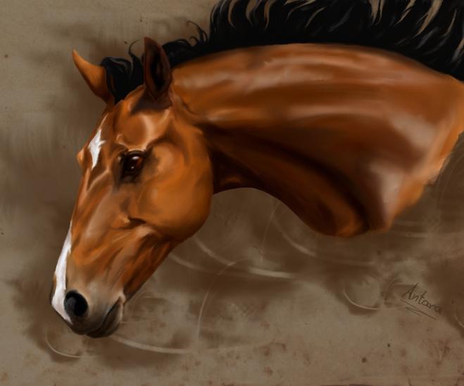 Bay Horse by Antarija