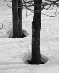 Trees Body Heat