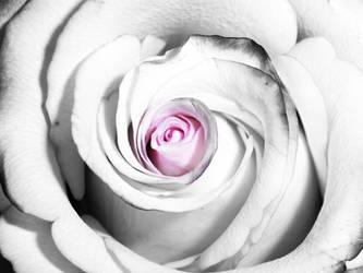 Rose wr