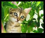 little greek cat