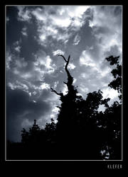 dead tree by klefer