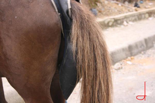 pantat kuda by Namita-Acil