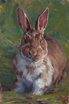 Rabbit's not Impressed