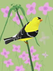 Golden Finch by benheath