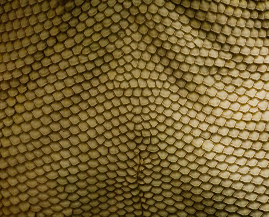 Scales - Texture