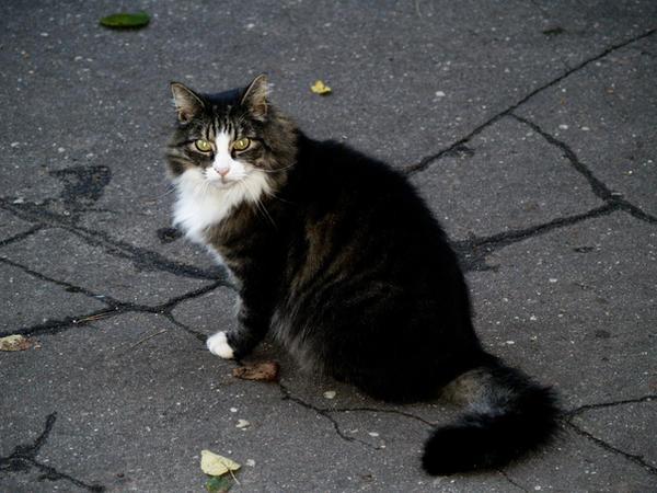 evil cat by megadef