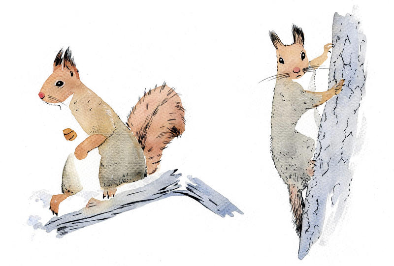 more squirrels by iva-ahma