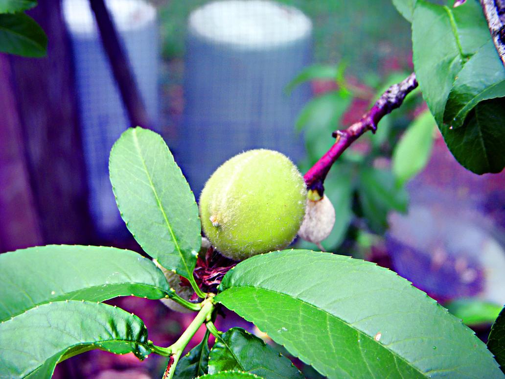 Peach tree by damjanvisnjic on deviantART