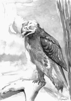 Hawk Skull