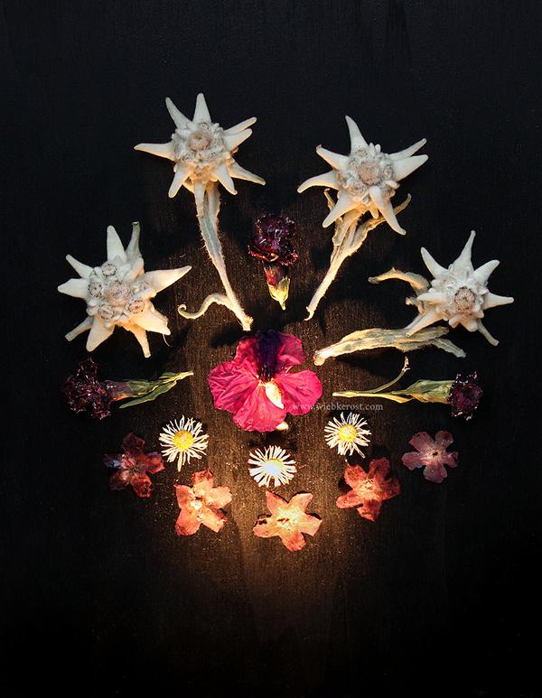 Flowers for Occvlta by wiebkerost