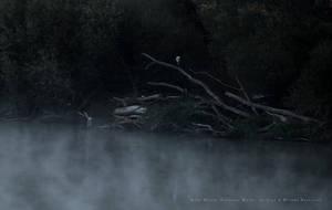 Grey Heron and Deadwood by wiebkerost