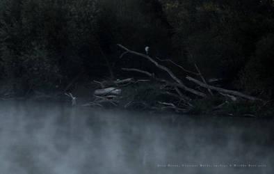 Grey Heron and Deadwood