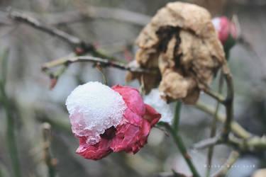 Rosengarten by wiebkerost